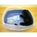 New@ชุดกระบะทรายแมวแบบมีขอบถอดได้ สีฟ้าอ่อนมาพร้อมที่ตักอย่างดีพร้อมแท่นเสียบ