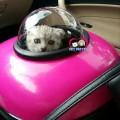 กระเป๋าใส่แมวอวกาศ Galaxy+เป้สะพายหลัง รับน้ำหนักได้ 1-5กก.น้ำหนักเบา แบบพลาสติกแข็ง ชมพู