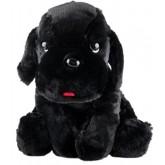 ตุ๊กตา Rainflower - รุ่น เฉาก๊วย ไซส์ Q  เป็นตุ๊กตาหมาผลิตจากผ้าขนฟู สีดำที่ยัดไส้ด้วยฝ้ายใยสังเคราะ