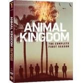 Animal Kingdom : The Complete 1st Season/ตระกูลชั่ว ครอบครัวโจร ปี 1  S16333D