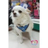 สายจูง+ชุดรัดอกสุนัขปกโปโล ยี่ห้อPuppe ผ้าตาข่าย สีน้ำเงินลายน้องหมาไซส์ M รอบอก46-72cm(19.5-28\quot