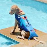 เสื้อชูชีพสุนัข ฉลามฟ้า สินค้านำเข้ายี่ห้อLD ไซส์ L รอบ-อกตัว69-80 ซม