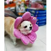 คอลล่าร์ ปลอกคอกันเลียของสุนัข ดอกไม้ แบบผ้าขน ใส่ได้2ด้าน ไซส์ L รอบคอ 26-28เซน(10.2-11นิ้ว)