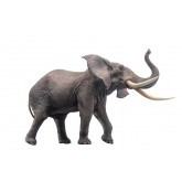 PNSO African Elephant