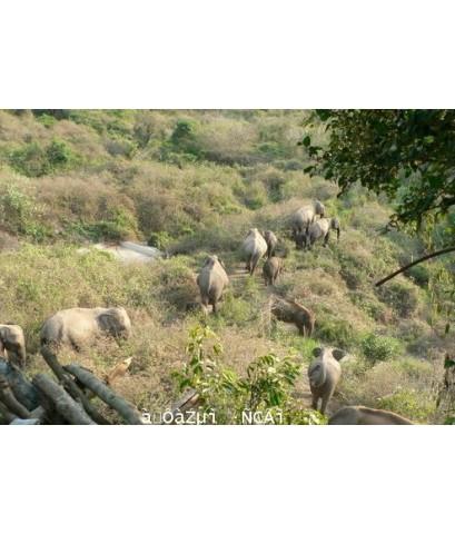 โปรแกรมทัวร์,แพ็คเกจทัวร์,กุยบุรี,อุทยานแห่งชาติกุยบุรี,ชมช้างป่าอุทยานแห่งชาติกุยบุรี,กระทิงป่า