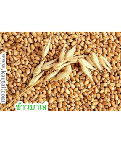 Barley ข้าวบาร์เล่ย์ ติดเปลือก สินค้านำเข้า บรรจุ 1 กิโลกรัม