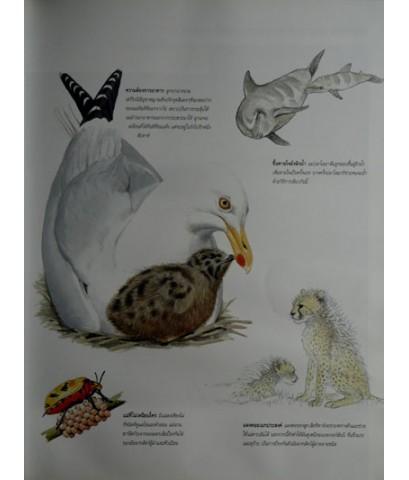 สำรวจชีวิตสัตว์โลกผู้น่าทึ่ง / รีดเดอร์ส ไดเจสท์