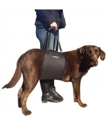 Labra : LBRAMZ001* อุปกรณ์สำหรับสัตว์เลี้ยง Veterinarian Approved Dog Canine