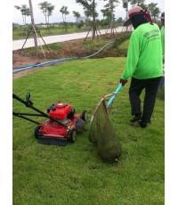 ตัดหญ้า