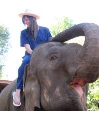 สอนเลี้ยงช้างเชียงใหม่ : 1 วัน สอนเลี้ยงช้างบ้านกึด