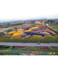 โปรแกรมทัวร์,แพ็คเกจทัวร์,ฟลอร่า แฟนตาเซีย วังน้ำเขียว,Flora Fantasia,เขาวงกตดอกไม้,ฟลอร่า แฟนตาเซีย