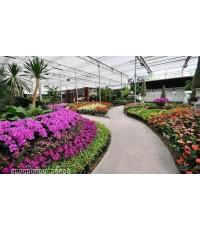 ดาษดาแกลเลอรี่,dasada gallery,ปราจีนบุรี,พันธุ์ไม้,ดอกไม้,ตึกเจ้าพระยาอภัยภูเบศร,วัดพระแก้วพิจิตร