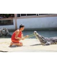 โปรแกรมทัวร์,แพ็คเกจทัวร์,ฟาร์มจระเข้สมุทรปราการ,Samut Prakarn Crocodile Farm