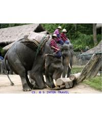 นำเที่ยวชมการแสดงของช้างแสนรู้ (ครึ่งวัน)
