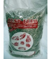 หญ้า pangola ยี่ห้อ best feed