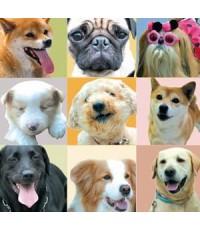 หนังญี่ปุ่นALL ABOUT MY DOG  เพื่อนสี่ขา ซี้ไม่มีซั้ว /พากษ์ไทย,ญี่ปุ่น+ซับไทย DVD 1แผ่นจบ
