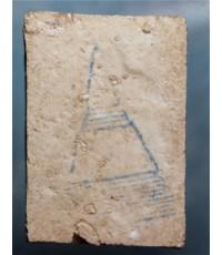 พระสมเด็จพิมพ์ใหญ่วัดบางขุนพรหม ปี๐๙ (ด้านหลัง)