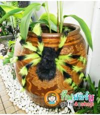 1 ตัว สีเขียวดำ แมงมุมยักษ์ แมงมุมปลอม ตุ๊กตาแมงมุม ของเล่นตลก ของเล่นแกล้งคน อุปกรณ์ตกแต่ง ฮาโลวีน