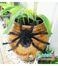 1 ตัว สีดำ แมงมุมยักษ์ แมงมุมปลอม ตุ๊กตาแมงมุม ของเล่นตลก ของเล่นแกล้งคน อุปกรณ์ตกแต่ง ฮาโลวีน
