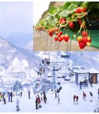 ทัวร์เกาหลี ท้าลมหนาว เล่นหิมะ ณ ลาน SKI RESORT  5วัน 3คืน XJ //ราคา 16,900 บาท//
