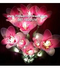 ดอกบัวสาย สีชมพูขาว