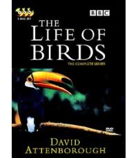 BBC The Life Of Birds [Complete] 3 DVD [Sound-English,Thai/Sub-English,Thai ]