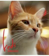 Kedi เมืองแมว [พากย์ตุรกี-บรรยายอังกฤษ] 1 Disc