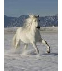 ม้าขาว