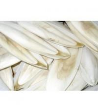 กระดองปลาหมึกเกรด ไซร์ใหญ่ 8-9 นิ้ว กินเสริมแคลเซียม เสริมสร้างกระดูก บรรจุ 4 กิโลกรัม