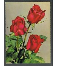 ภาพโปสการ์ดเก่า ภาพดอกไม้