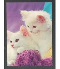 โปสการ์ดเก่า ภาพแมวน้อยน่ารัก
