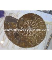 แอมโมไนต์,แอมโมไนท์ (Ammonite)