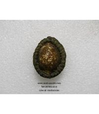 เบี้ยแก้พอกผงลงรักหลังเหรียญหล่อโบราณหลวงปู่ละมัย พิธีรวยทันตา (1) Lp Lamai