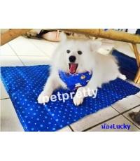 Sukina Petto Cool  pad (90x60cm) แผ่นนอนลดอุณหภูมิสำหรับสัตว์เลี้ยง