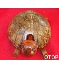 เต่าหัวดิ้นจากกะลา