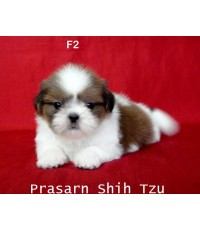 ลูกสุนัขเกิดวันที่ 25/06/2556 - F2