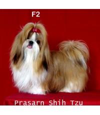 สุนัขชิสุเกิดวันที่ 25/07/2557 - F2