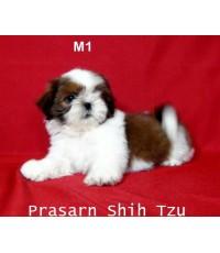 ลูกสุนัขชิสุเกิดวันที่ 26/05/2560 - M1