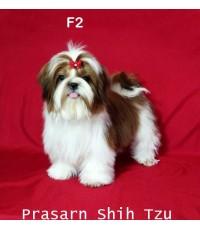 ลูกสุนัขชิสุเกิดวันที่ 6/01/2561 - F2