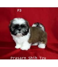 ลูกสุนัขชิสุเกิดวันที่ 7/03/2562 - F3