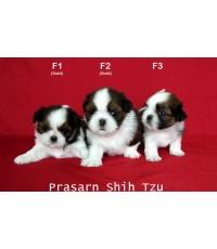 ลูกสุนัขชิสุเกิดวันที่ 14/05/2562 (Available Now)