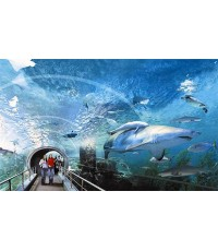 แพ็คเก็จบัตรเข้าชม Siam  Ocean World  (สยามพารากอน)