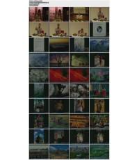 Camera : บรรยายและบอกเทคนิคการถ่ายรูปต่างๆ (วรนันทน์ ชัชวาลทิพากร) DVD MASTER พากษ์ไทย 1 แผ่นจบ