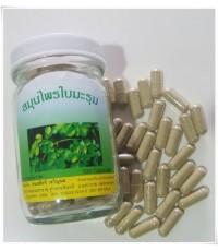 สมุนไพรไทย : ใบมะรุมแคปซูล