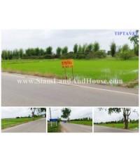 00019 ขายที่ดินเชียงใหม่ บวกค้าง สันกำแพง เชียงใหม่ Sale Land Near Wat Rang Kongkhao, Sankampheang,
