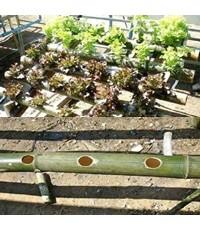 ปลูกผักไฮโดรโปนิกส์ ด้วยกระบอกไม้ไผ่