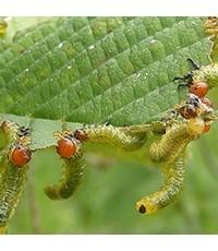 การทำสงครามระหว่างเกษตรกร กับ หนอนแมลงศัตรูพืช