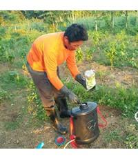 เกษตรกรเพชรบูรณ์ หัวสมัยใหม่ กำจัดเพลี้ยและศัตรูพืช เพื่อลดต้นทุน เพิ่มรายได้ด้วยเชื้อราบิวเวอร์เรีย