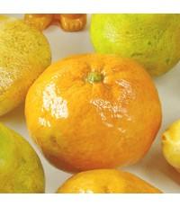 แม่พิมพ์ รูปส้ม 3D