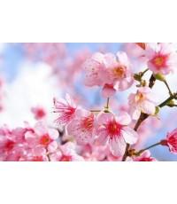 หัวน้ำหอมกลิ่น beauty blossom -PC0049  450 ml.